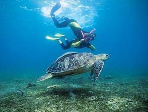Ariane in Mayotte, with green turtle